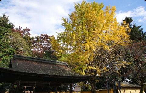 金比羅山(香川県):写真